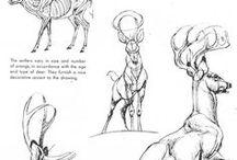 Deer - Tutorial - Sketch