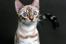 Kittys and Cuties