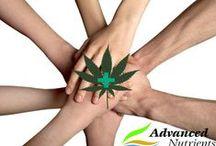Marijuana Community