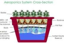 Growing Systems / Tips on how to build growing systems on your own and various growing systems for your garden.