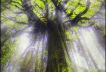 TREES of LIFE ~ WONDERFUL & BEAUTIFUL TREES / The Natural Beauty of Trees / by MaryGrace McCord