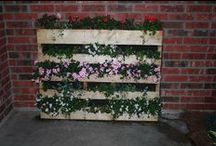 Pallet Planting / by The Garden Center at Sepers Nursery