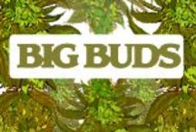 Big Buds Magazine / Your One Source For Growing Medical Marijuana. http://bigbudsmag.com/    This first of it's kind web content portal aims to offer a one-stop website for growing Medical Marijuana and the lifestyle that has arisen within this amazing industry. From cultivation and distribution to medication and appreciation, Big Buds Magazine will cover all facets of the medicinal cannabis culture in a way that is sophisticated, informative and entertaining to all readers.