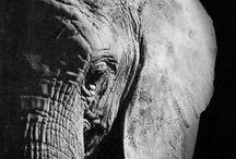 The elefant <3 / Elefants