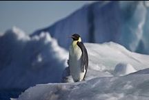 Antarctica / The Antarctic peninsula, Ross Sea, Falklands, South Georgia, Macquarie Island, and Sub Antarctic Islands of Auckland, Campbell, Enderby and Snares.