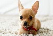 ♥Puppy...Puppy... Puppy♥