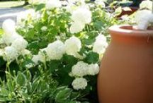 Green Living / Green lifestyle hacks for your home and garden.