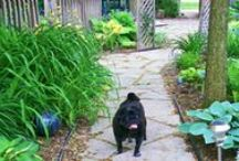 Pets / Learn tips to keeping your pets healthy and happy.