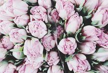 T U L I P S / De mooiste tulpen ook te koop op boeketten.nl