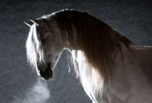 ☆ HORSES ☆