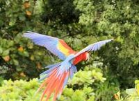 Retreats in Costa Rica - Pura Vida / This Pinterest Board is about Costa Rica Pura Lifestyle Design. Nature Photography, Tourist Activities, Retreats, Business Masterminds and Investment Real Estate.