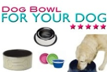 Find the Perfect Dog Bowl / Every dog is unique and needs the perfect dog bowl just for them that fits their needs and your decor.