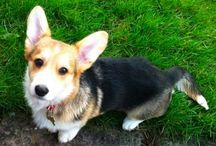 animals / cutest animals in the world