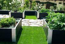 Vegetable Garden / by Akemi Gardens