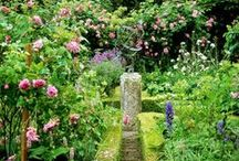 garden design / Combinations of shape. To study and inspire.