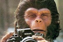 Planet of the Apes / Planet of the Apes