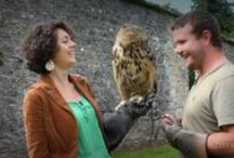 Video Guides   Ireland / Video Guides from Ireland - Visit http://www.luxuryhotelsireland.com for more.