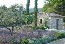 Mediterranean Gardens / by Akemi Gardens
