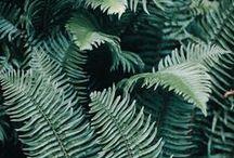 Plants / #greenery #plant #green #botanic