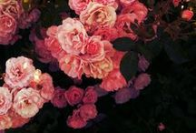 Flowers / #flowers #beauty #nature #garden #colours