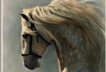 Horses / Dreaming of my past and future horses... / by Leslie Nicole