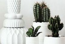 Dekoration / WEISSE RABEN – Ambiente.Design.Leben in Weiß – ist der Online-Versand für edle Wohn- Accessoires, exklusiven Porzellanschmuck und feine Objekte des Alltags; mit Sitz in Stuttgart. Das Besondere: Alle Produkte gibt es ausschließlich in Weiß.