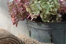 Decor: HYDRANGEAS / Fresh, dry, any way you desire! / by Donna - Funky Junk Interiors