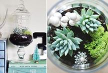 Terrariums and Succulents / by Laurie Cafe