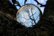 reflections / by izabella szuromi