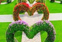 jardinagem / flores e arquitetura