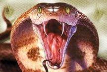 cobras / cobras