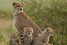 animais selvagens e fofo