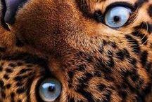 Animaux divers / De belles photos d'animaux