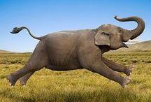 Elephants & Cutenesses