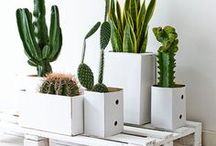 PLANTUKIS / masetas, jardines, plantas...
