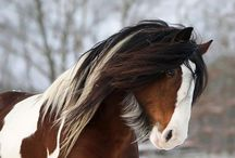 Heste og stalde