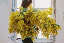 Blumen, Natur