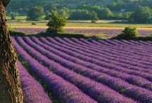 Provence - France