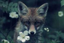 Garden / by Cheryll Artz