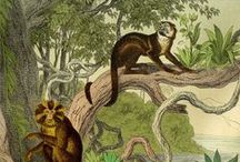 old school naturalist illustration / old zoological and botanical drawings