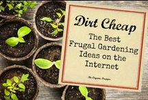 Gardens, Plants, Trees / All about Gardens, Landscaping, Frugal Gardening, Outdoor Decor. From homesteading to flowers.  [Collection by: http://twopluscute.com ]
