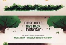 Tree Facts / Tree facts and statistics from around the world.