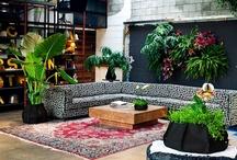 Interior Flowers & Plants