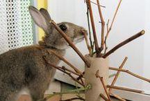 Bunny*