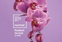   Pantone 2O14  
