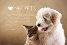 THE PET CONCIERGE / The Pet Concierge is, at its heart, an educational center teaching all aspects of pet care and pet ownership. Our aim is to bring together opinions and products from a wide range of veterinary specialists to provide a definitive, one-stop website for all your veterinary questions and needs.