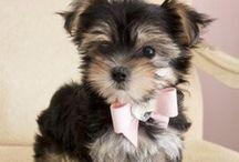 Cute Puppyy / Cute Puppy