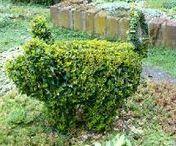 Tuin Varkens - Garden Pigs / Buxus varkens - gieters - bloempotten
