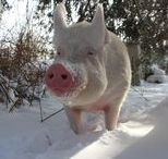 Winter / Sneeuw en koud