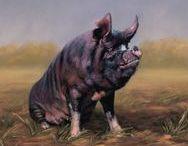 Berkshire Varkens / Berkshire varkens zijn het oudste Engelse varkensras.
